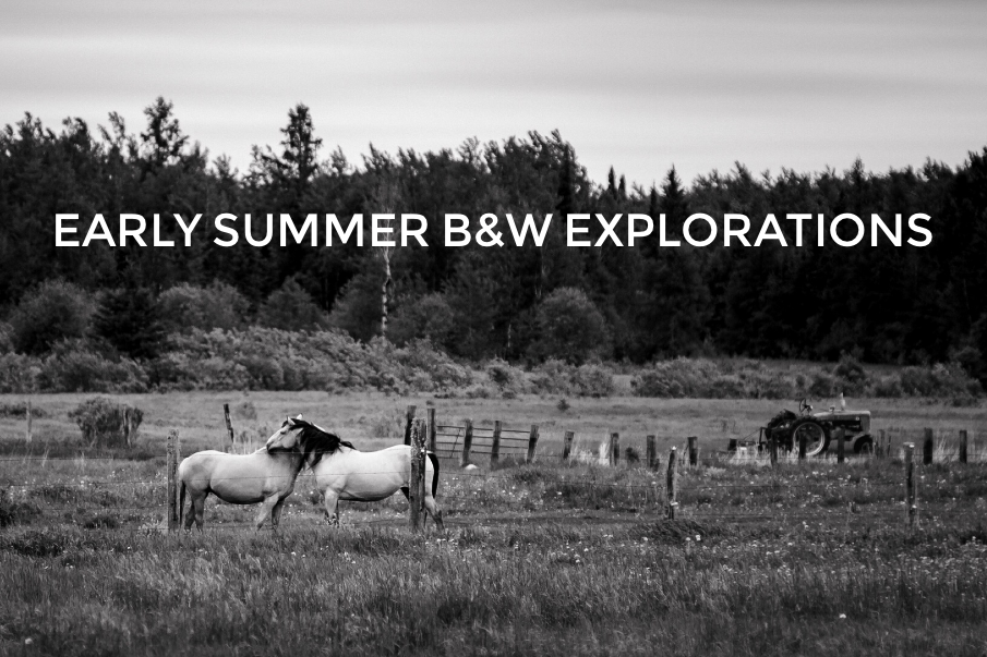 Early Summer Black and White Explorations